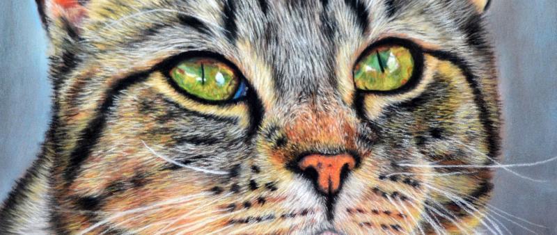 Katzen malen mit Pastellstiften