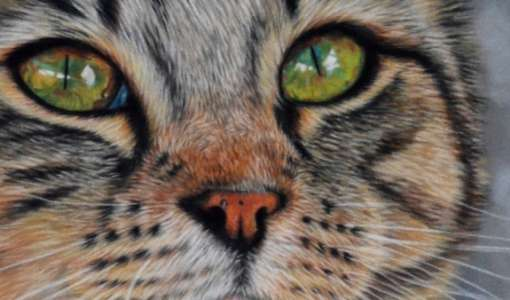 Katzen malen in Softpastell auf Velourpapier
